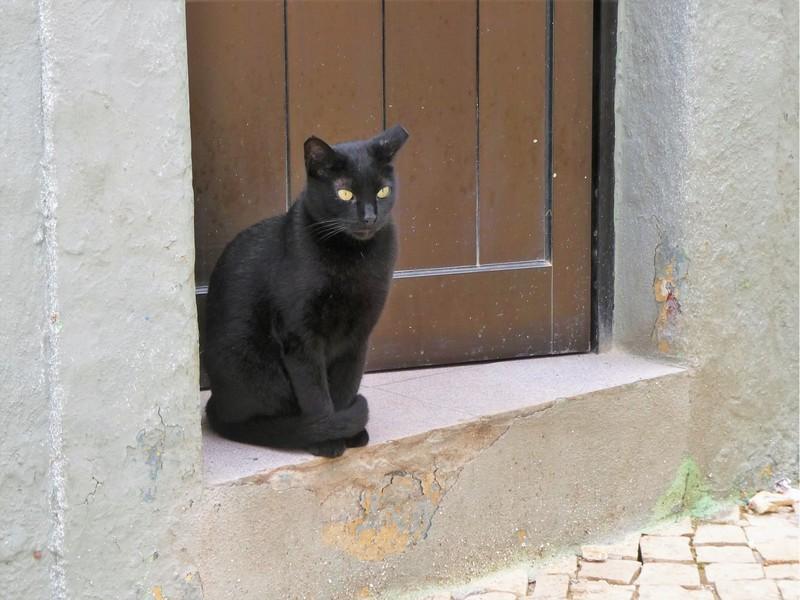 Poes met bijzondere ogen in de oude stad van Olhão