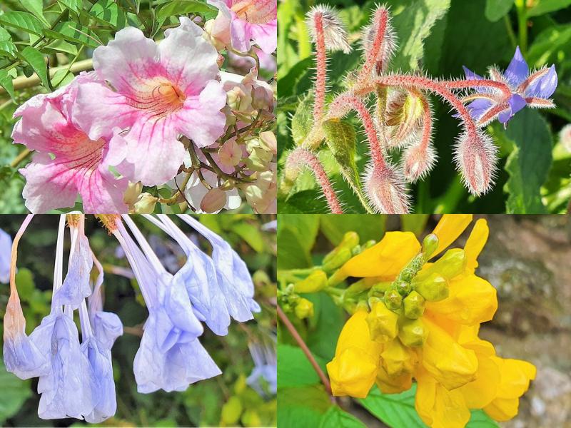Collage met vier bloemen