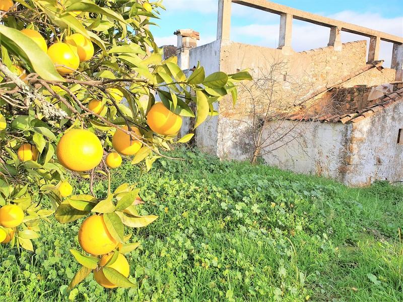 Sinaasappels in boom achter ruïne