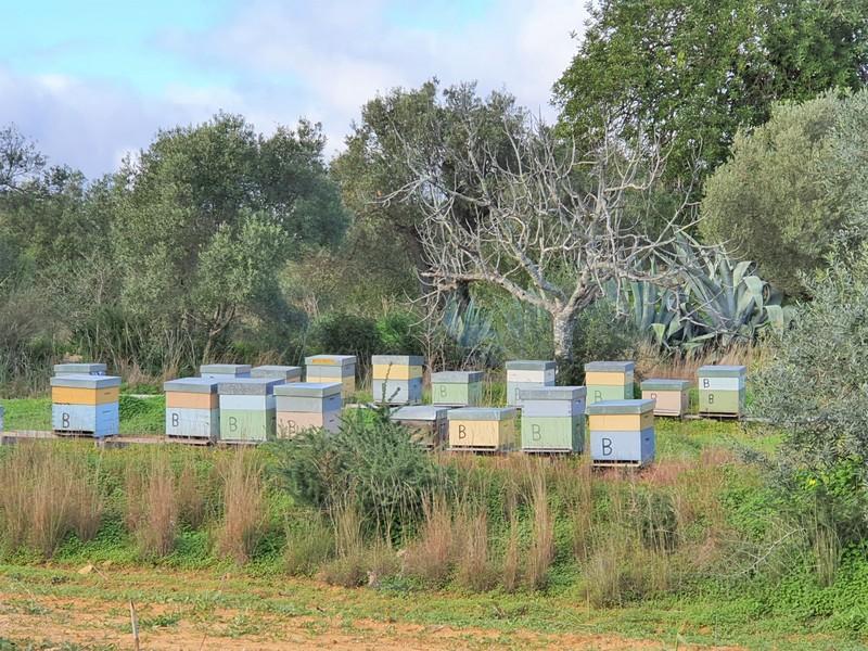 Gekleurde bijenkasten op een veldje