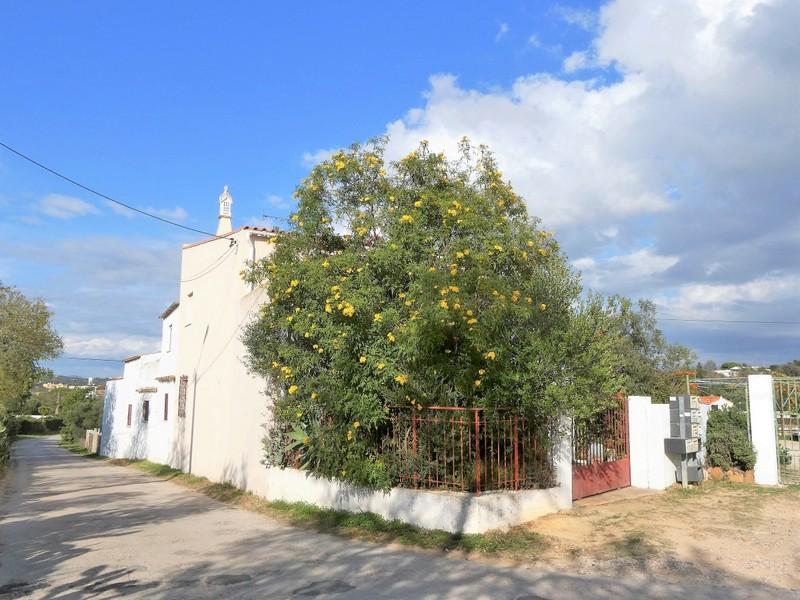Wit huis met grote, bloeiende boom ervoor