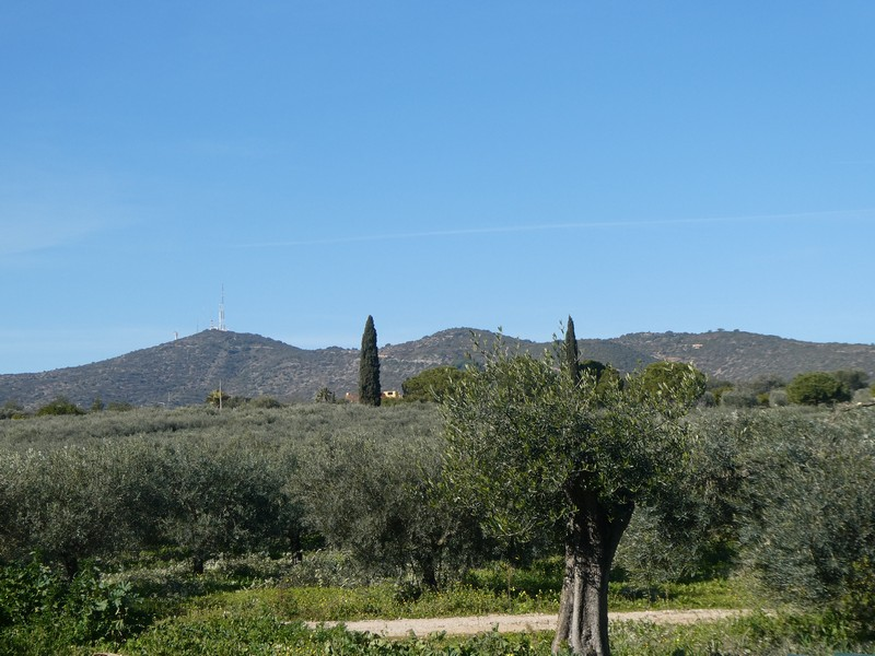 De olijfboomgaard van Monterosa, met op de achtergrond de Cerro Sào Miguel (de linker heuvel)