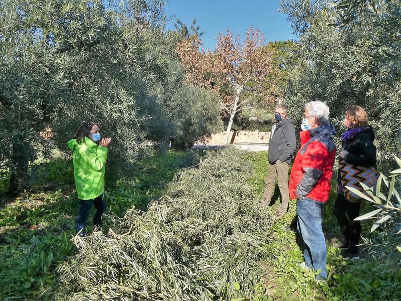 De mensen van de camping luisteren naar de medewerker van Monterosa die uitleg geeft over het snoeien van de olijfbomen en het oogsten van de olijven.