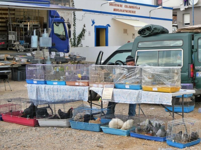 Tafel met rij kooien met papegaaien, parkieten, kanaries met op de grond daaronder nog een rij kooien met kippen en duiven. Achter de tafel zie je nog net de verkoper zitten.