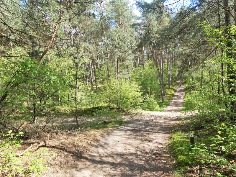 Het bos bij camping Harskamperdennen